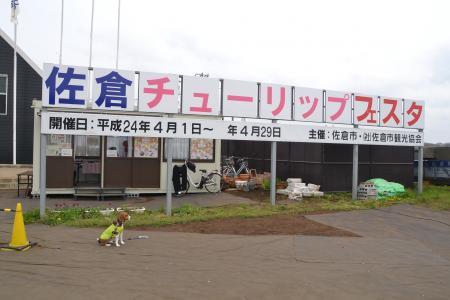 20120416佐倉チューリップフェスタ08