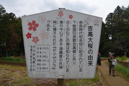 20120416吉高の大桜12