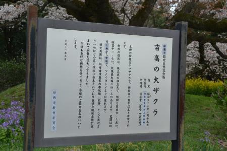 20120416吉高の大桜09