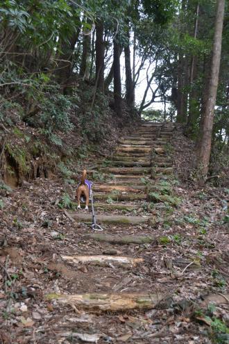 20120417小篠塚城址05