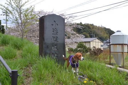 20120417小篠塚城址07