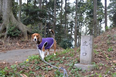 20120417小篠塚城址24