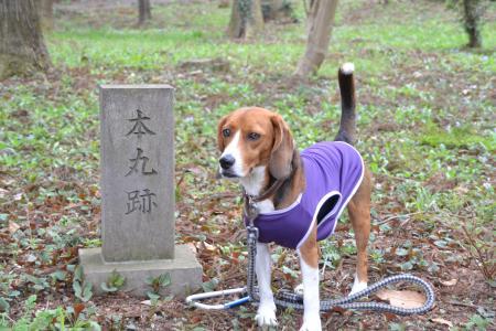 20120417小篠塚城址19