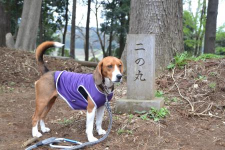 20120417小篠塚城址26