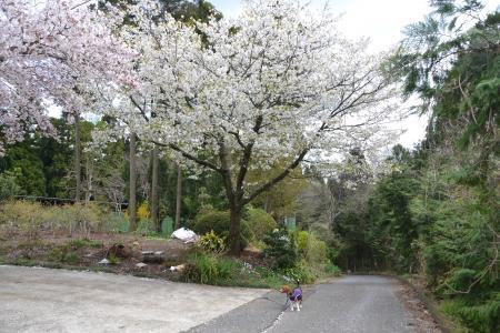 20120417小篠塚遊歩道11