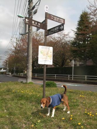 20110421散歩03