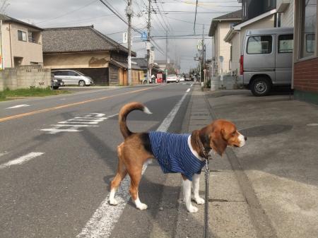 20110421散歩01