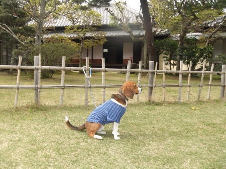 20110421散歩09