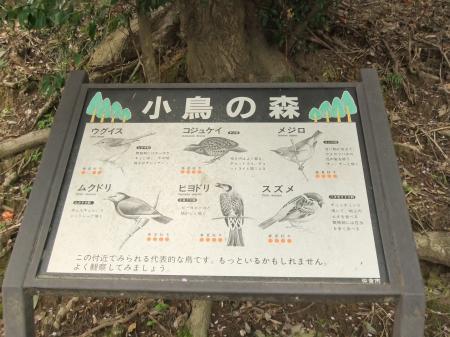 20110421散歩15