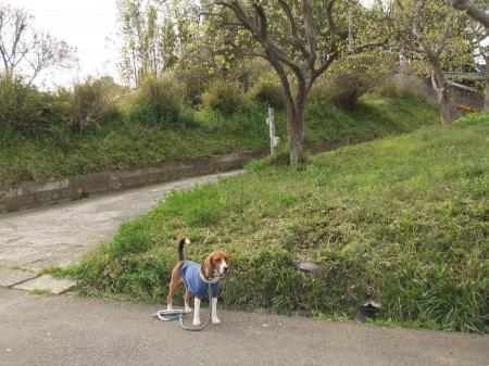 20110421散歩25
