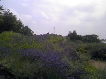 ベランダー山
