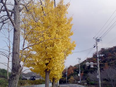 20101128_1
