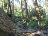 岩が露出した登山道