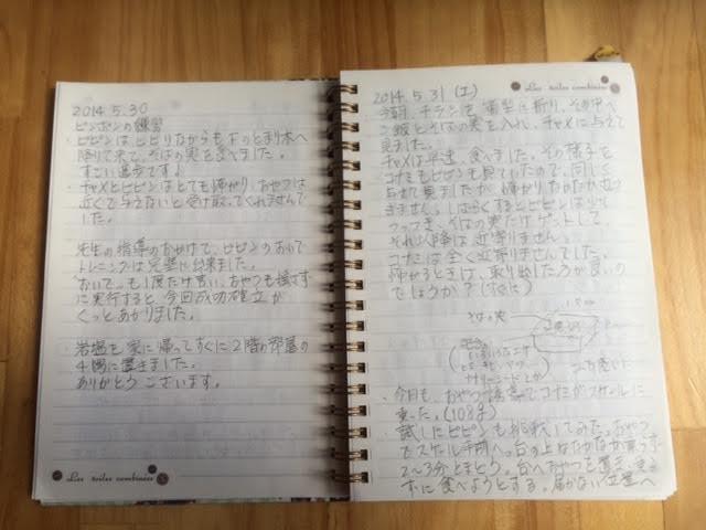 ピピンちゃん観察ノート3
