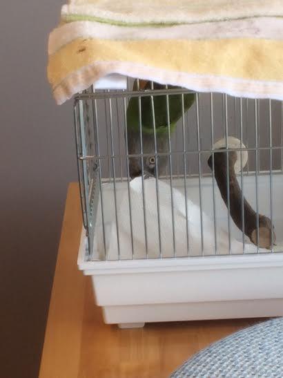 パロちゃん1018コウモリ