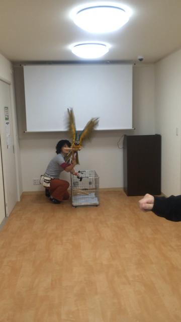 キョロちゃん1109-14