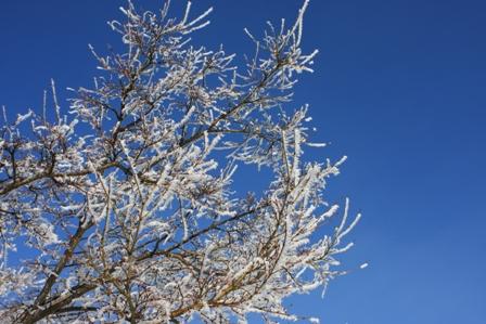 2月16日 朝の木②