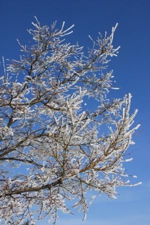 2月16日朝の木