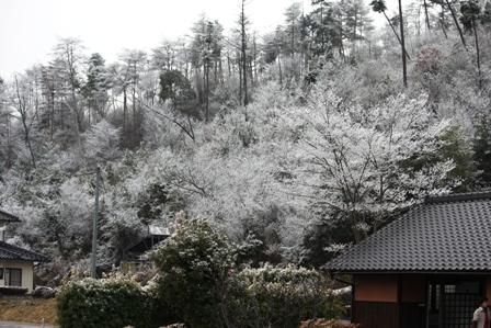 3月3日 雪化粧