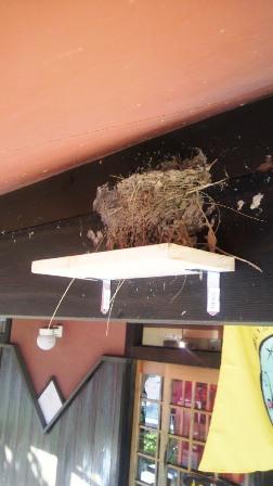 5月30日ツバメの巣