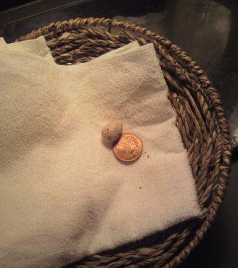 ツバメの卵①
