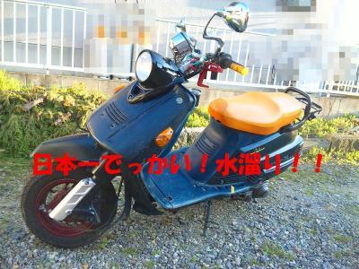 DVC00063b.jpg