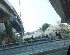 13 3 24edogawabasi (2)