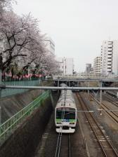 13 3 26sakura (2)