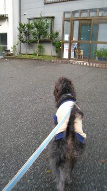 chuugoku6.jpg