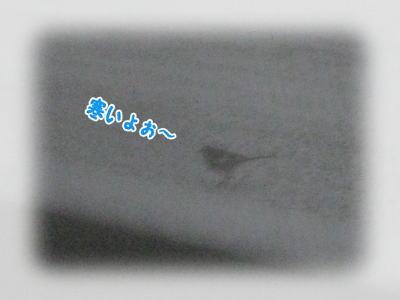 2501292.jpg