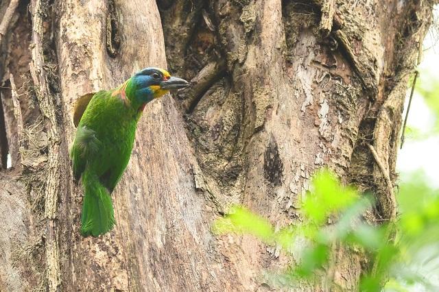五色鳥が住む森(2)