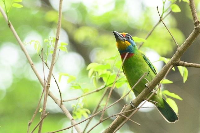 五色鳥が住む森(1)