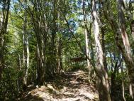 外森山ハイキングコース