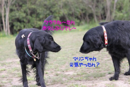 IMG_6768.jpg