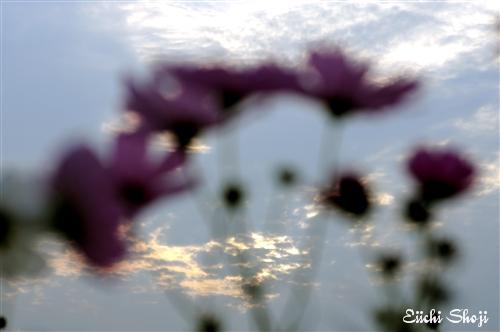 15-SHO_0851.jpg
