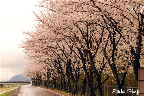 2010-nan-SHO_0077.jpg