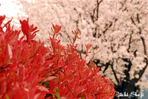 2010-nan-SHO_0135.jpg
