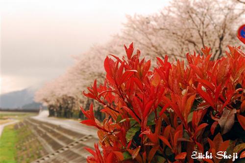 2010-nan-SHO_0169.jpg