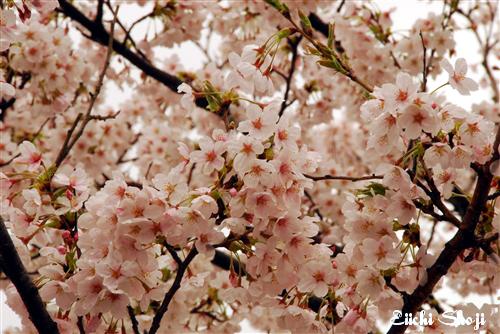 2010-nan-SHO_0185.jpg