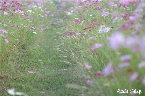 20101015-SHO_0042.jpg