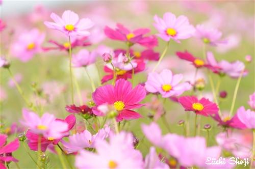 20101015-SHO_0109.jpg
