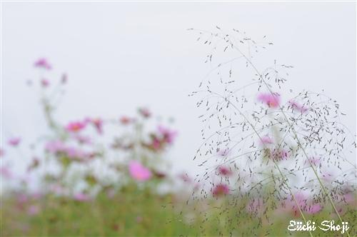 20101015-SHO_0555.jpg