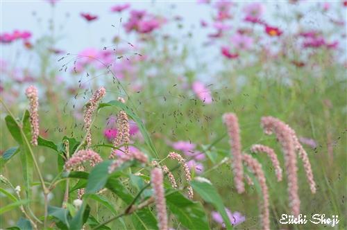 20101015-SHO_0626.jpg
