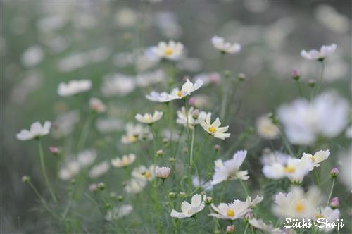 20101015-SHO_0998.jpg