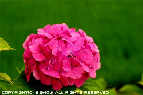 5-SHO_0733.jpg