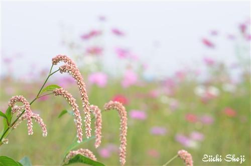 9-SHO_0601.jpg