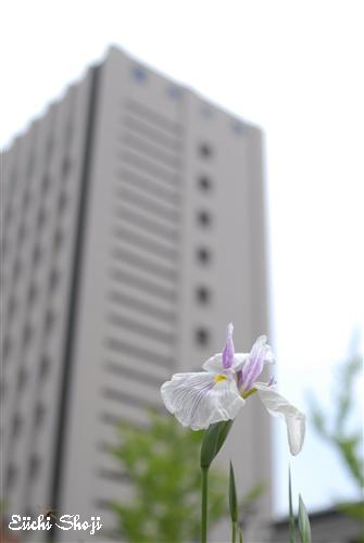 SHO_0062.jpg