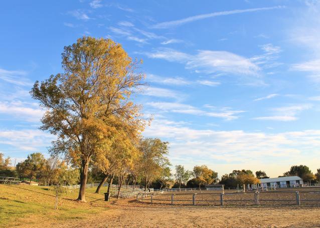 牧場の朝-05