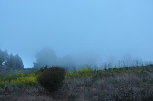 Foggy-02
