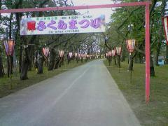 桜祭り準備52_600